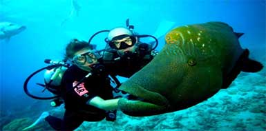 All inclusive scuba diving packages in Cozumel, Mexico